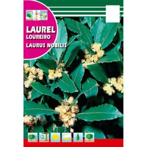 Semillas de Laurel