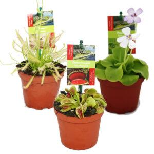 Plantas Carnívoras Ikea: Cuidados, Especies y Comprar Online